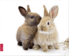 SPEEDLINK Silk-Mousepad Rabbit