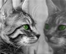 SPEEDLINK SILK Cat - Grau