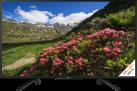 SONY KDL-43RF455 -  TV LCD/LED - 43 - Full HD - HDR - Motionflow™ XR - Noir