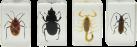 CELESTRON 3D Insektenpräparate Kit #1