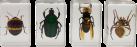 CELESTRON 3D Insektenpräparate Kit #2