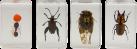 CELESTRON 3D Insektenpräparate Kit #3